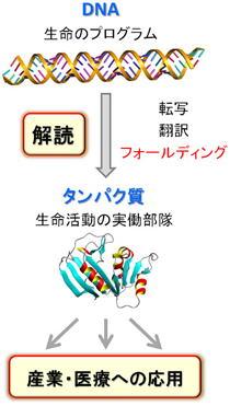 arai_image